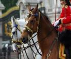 Cavalos com ornamentos