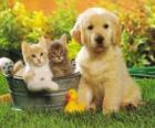 Doggy com dois gatinhos