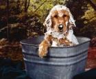 Cachorro tomando um banho