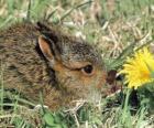 Coelho com uma flor