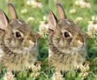 coelho tímido