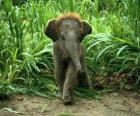 elefante do bebê