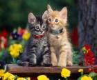 dois gatos com colar