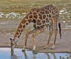 girafa bebendo em uma lagoa