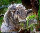Coala com seu filho nas costas subindo em uma árvore