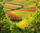 paisagem de outono na Vinha