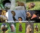 O Dia da marmota é uma festa que se celebra nos EUA e Canadá em 2 de fevereiro