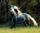 Lovely cavalo com longa crina e cauda longa