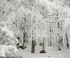 Floresta completamente nevada