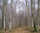 Floresta sem as folhas no inverno