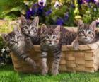 Quatro gatinhos em uma cesta