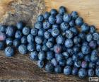 Frutas do Oxicoco, frutas do Mitilo ou bagas