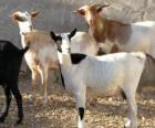 Grupo de caprinos domésticos