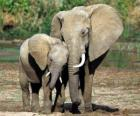 Mãe controlando o pequeno elefante, com a ajuda da sua tromba