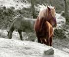 Cavalos pastando no campo
