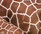 A pele das girafas