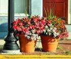 Flores em um pote ou vaso de plantas