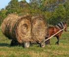 Fazendeiro com uma carruagem ou carroça com cavalo