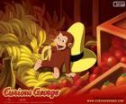 O macaco George comendo uma banana