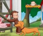 O macaco George e Hundley cão salsicha