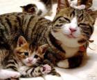 Mamãe gato com seu gato bebê