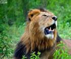 Um jovem leão
