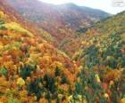 Floresta em cores de outono