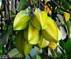 Carambola, frutas exóticas