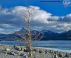 Uma árvore morta, perto do lago