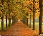 Caminho entre árvores no outono