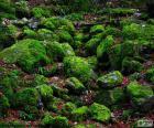 Pedras cobertas de musgo