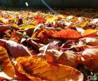 Folhas secas no outono