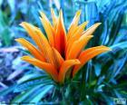 Exótica flor cor laranja