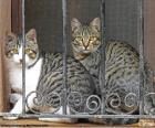Dois gatos em uma janela