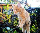 Um gatinho em uma árvore