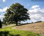 Árvore no campo arado