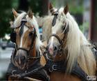 Cavalos de esboço