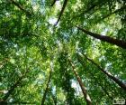 Copas das árvores