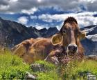 Vaca repouso