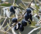 Ramo de oliveira preto