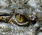 Puzle Olho de crocodilo