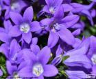 Cor púrpura ou roxo