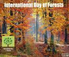 Dia internacional das florestas