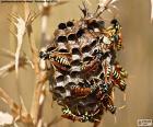 Enxame de vespas