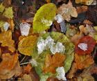 Folhas e gelo