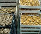 Caixas de cogumelos