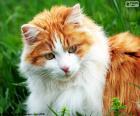 Um gato elegante