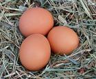 Três ovos