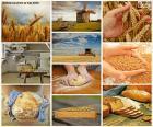 Boa colagem onde podemos ver todos os processos necessários para fazer pão