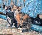 Três gatinhos